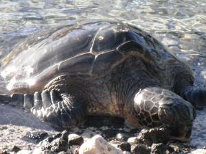 ...and sea turtles...